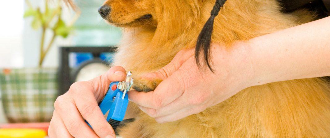 choosing the best grooming service online