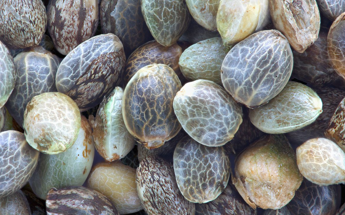 Know More About The Best Seed Banks Online